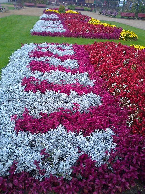 kwiaty 002