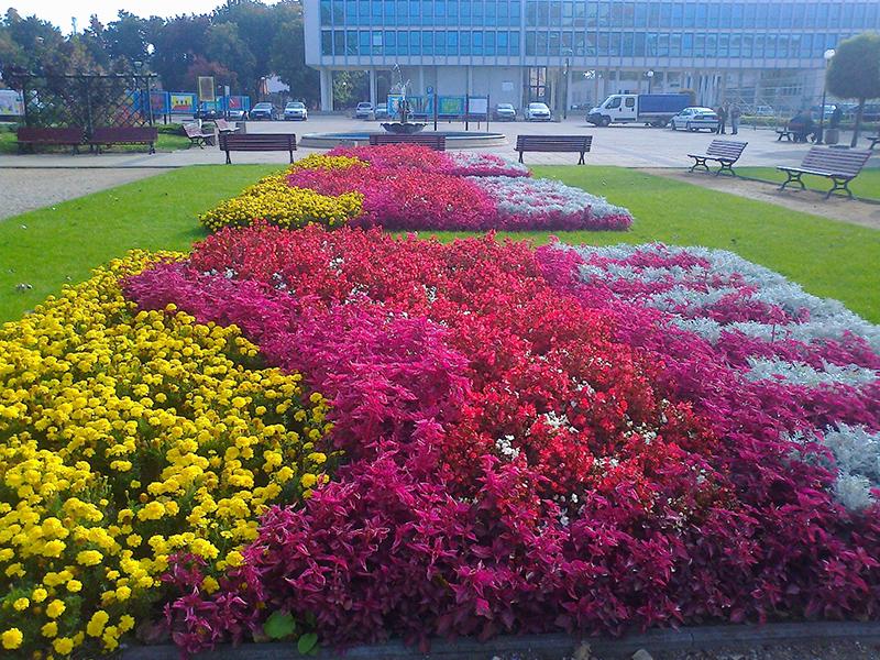 kwiaty 003