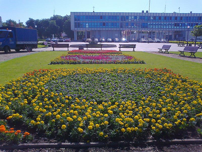 kwiaty 009