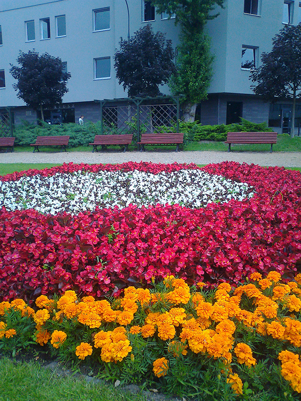 kwiaty 010