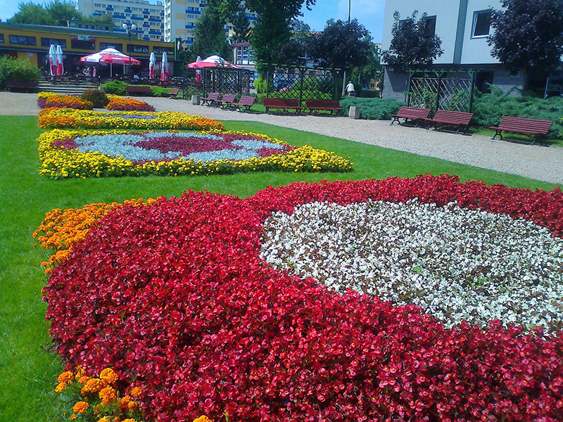kwiaty 012