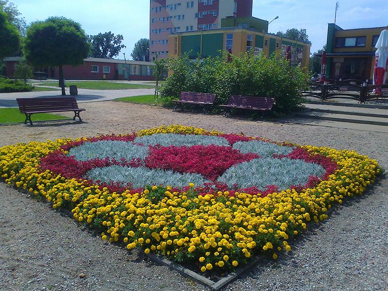 kwiaty 014